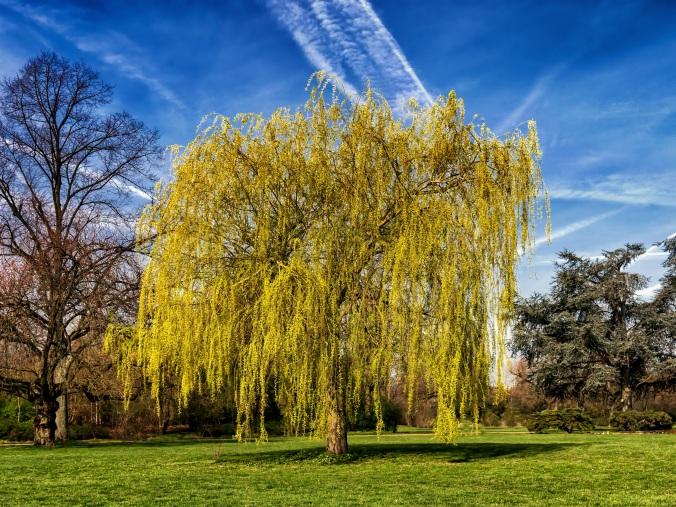 tree-2196450.jpg